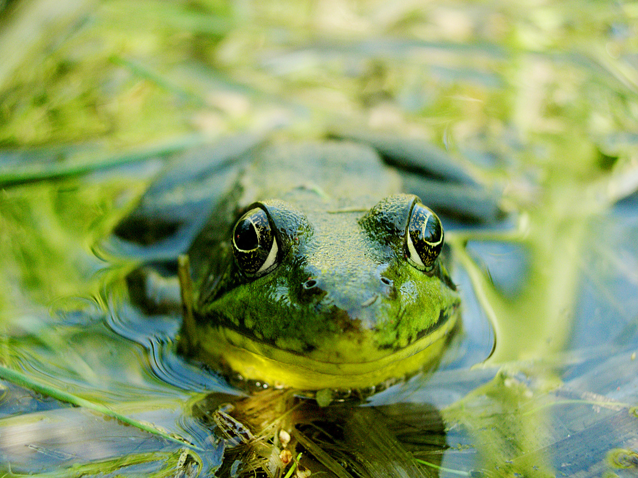 Frog Monitoring Workshop – February 26th